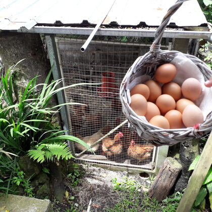 Fresh eggs from our hens for your breakfast (we do also sell them)
